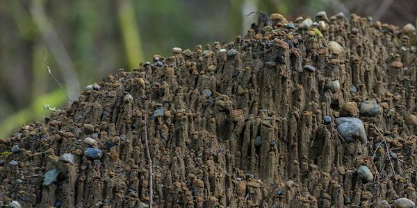 Soil Pedestals