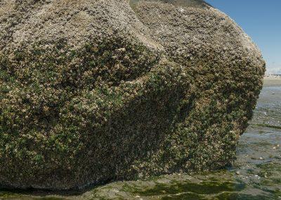 Close-up of glacial erratic