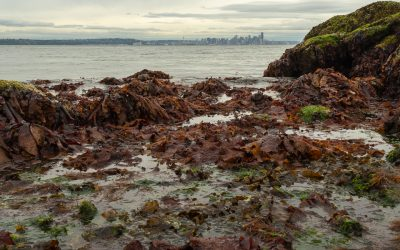 Salish Sea Tide Pools
