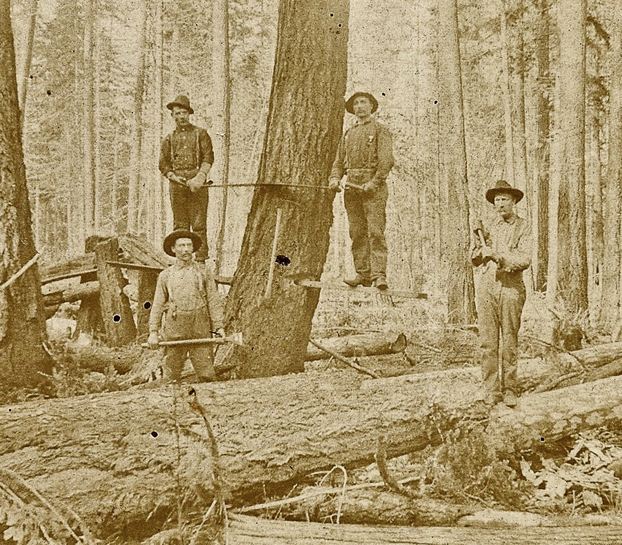 8a-logging in Vinland-4