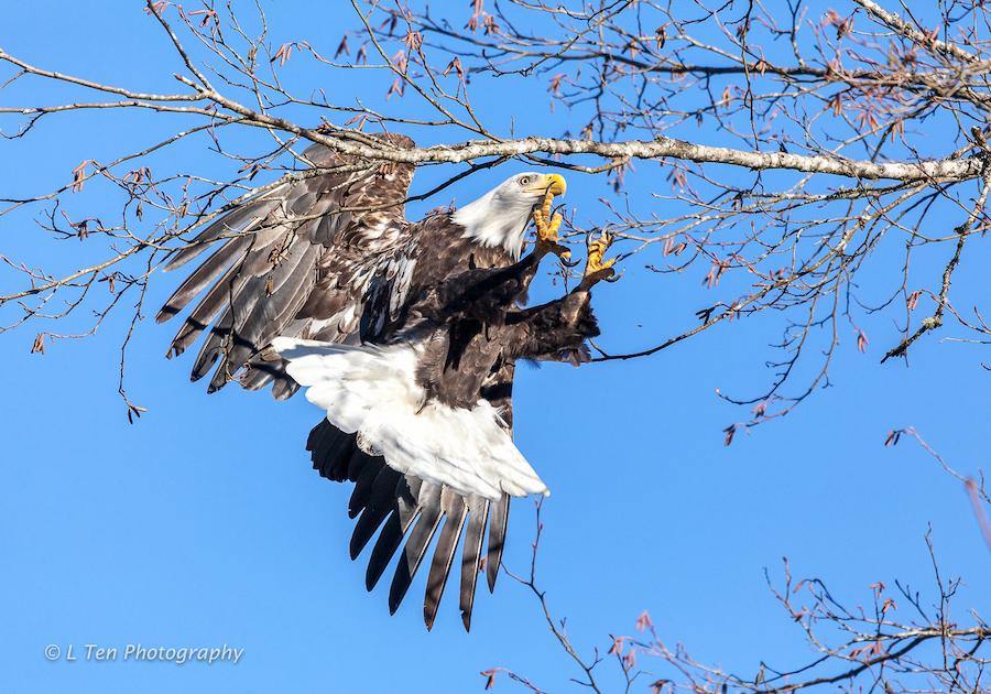 eagle-1 LTen 900