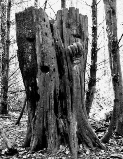 The other side of the same stump that stands as a silent witness to the forest that once was.