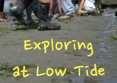 Exploring at Low Tide (10 min)