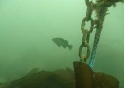 Artificial Reef (9m 40s)