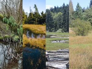 From Swamps and Bogs …